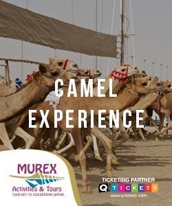 CAMEL  ACTIVITY (4 HRS)