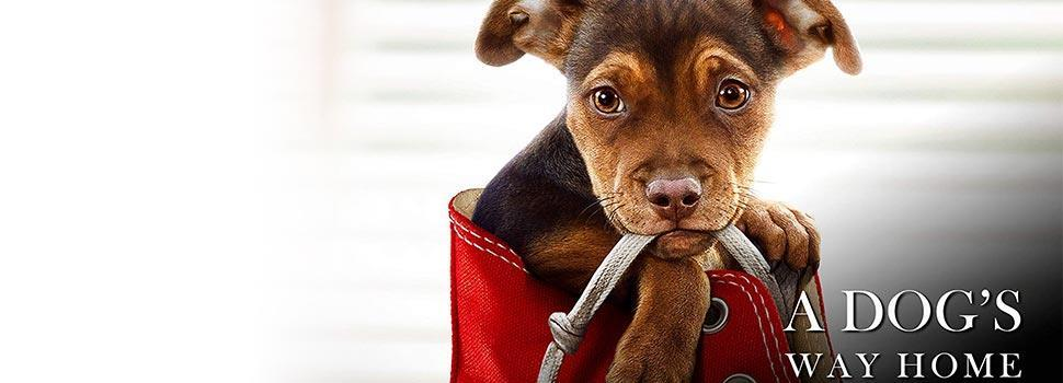 A DOG'S WAY HOME (ENGLISH) Cinema Tickets Online Booking, Movie Show